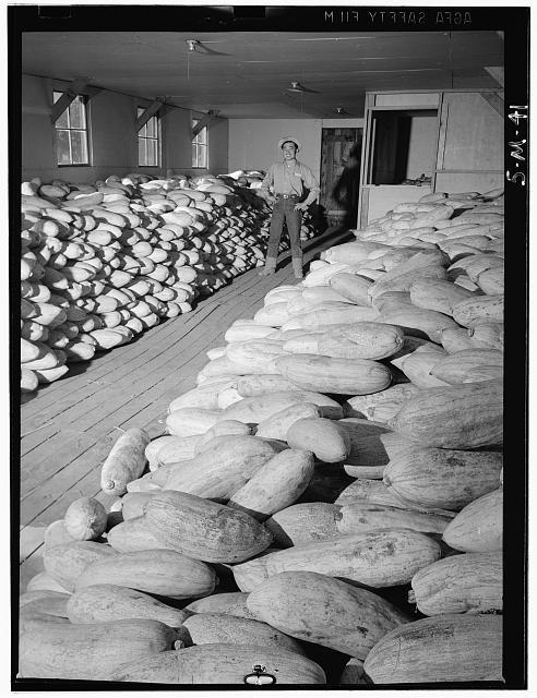 Benji Iguchi with squash, Manzanar Relocation Center
